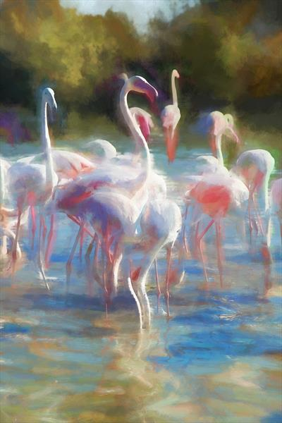 Flamingos by Ron Whitby