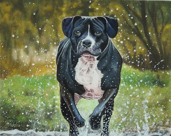 Duke running in the sream by Cathy Settle