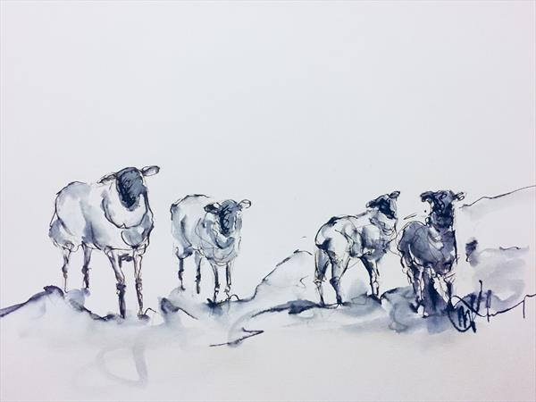 Inquisitive Sheep  by Wendy Thompson