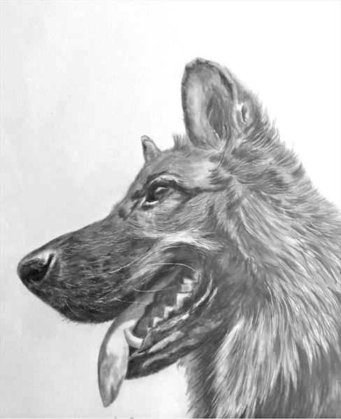 German Shepherd by Maureen Crofts