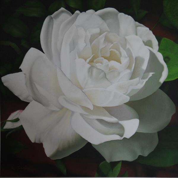 White Rose by Richard Franks