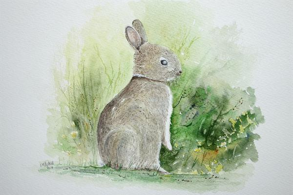 Young Rabbit by Eric Hattrell