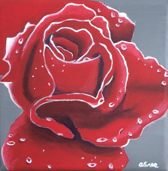 Red rose  by Andrew Snee