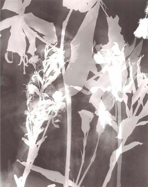 Ghosts of Flowers (Black & White / Greytone) by Chris Russon