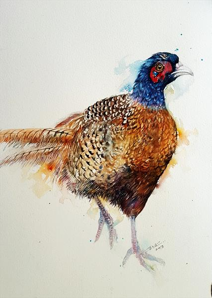 FeFe the Pheasant by Arti Chauhan