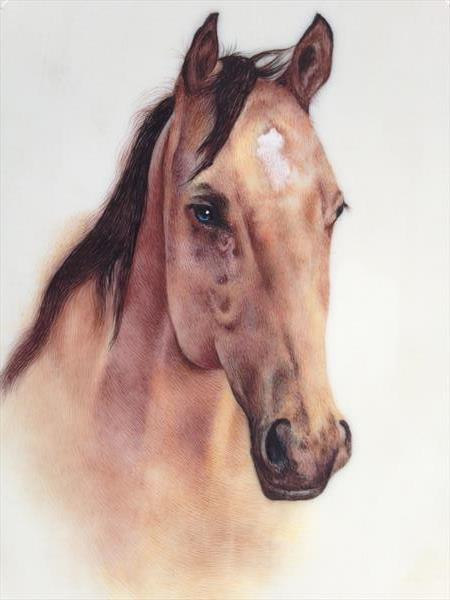 Beautiful  close-up Horse by Pratibha jain