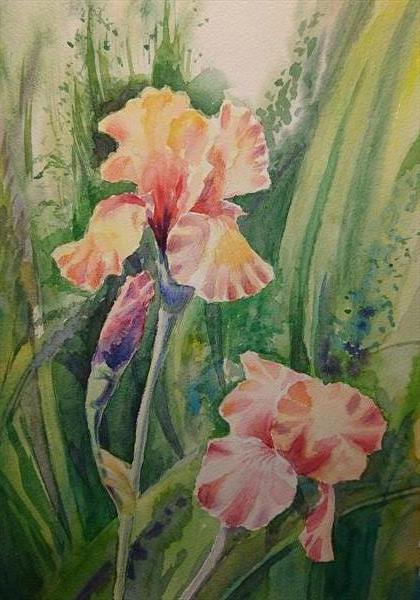 Pink Irises flowers in sunlight A3 Artist watercolour paper Winsor & Newton by Elena Haines