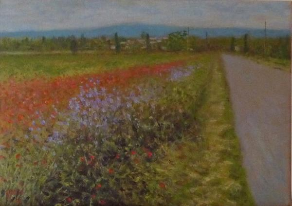 Minervois Poppies by David Moore