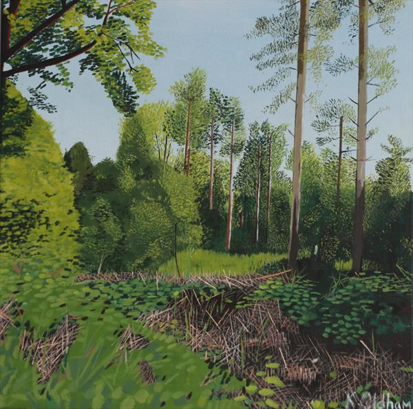 Woodland view by Kevin Oldham