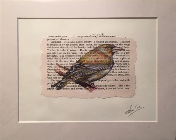 Greenfinch Book Page Art by Lucy Malivoire