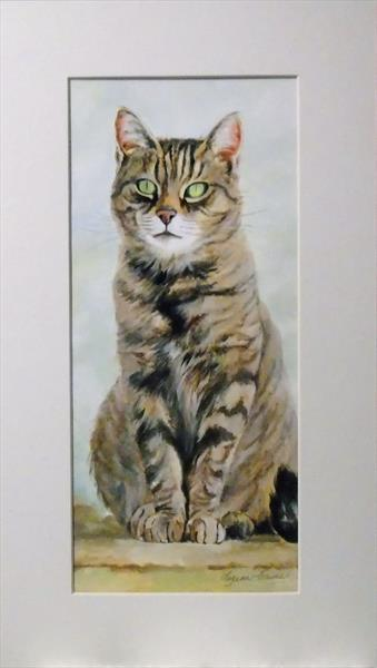 TABBY CAT by Suzanne  Haimes