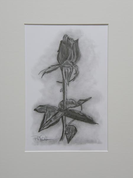 Rose by Patricia Williams