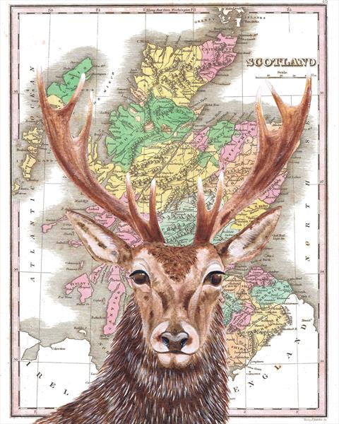 Stag and Antique Map of Scotland Limited Edition Print by jane Wilson