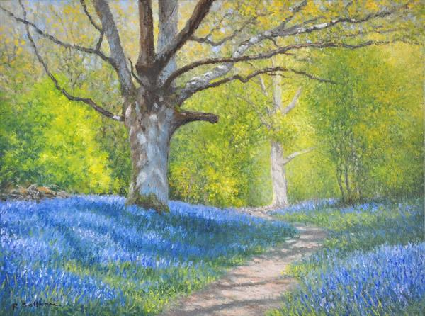 Bluebell Wood by Richard Sellence