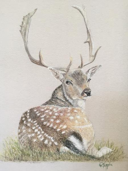 Recumbent Fallow Deer - Giclee Print by Rachel Tappin