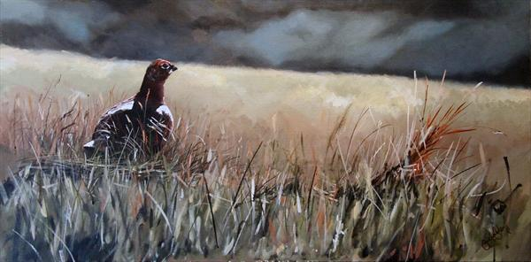 Grouse On the Moor by Daniel Barber