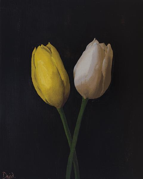 Tulips (yellow and white) by David Foster