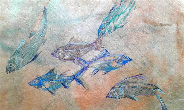 Fossilized shoal of fish by Helena Manchip