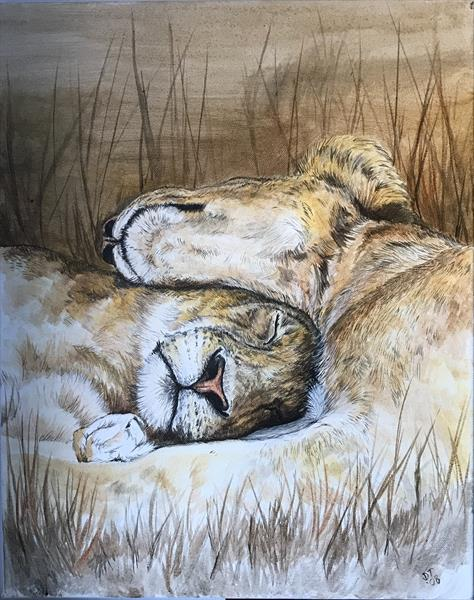 Nap time by Donna Terry
