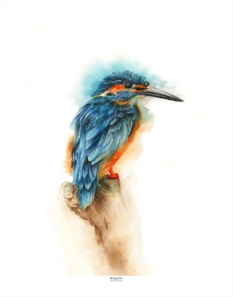 Kingfisher  by Leigh  Townsend