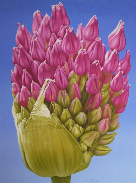 Allium Opening by Richard Franks