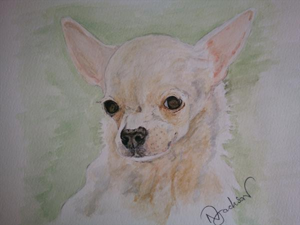 Original Watercolour Painting . Chihuahua Dog Watercolour Portrait.Size 8 X 10 by Nigel Jackson