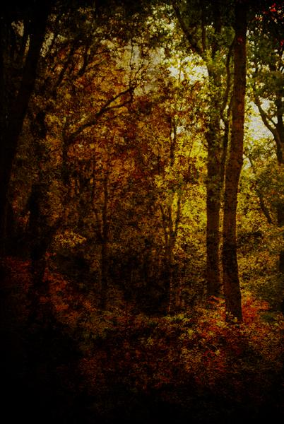 Autumn by Linda Hoey
