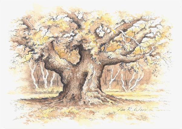 The Major Oak by Ian R Ward