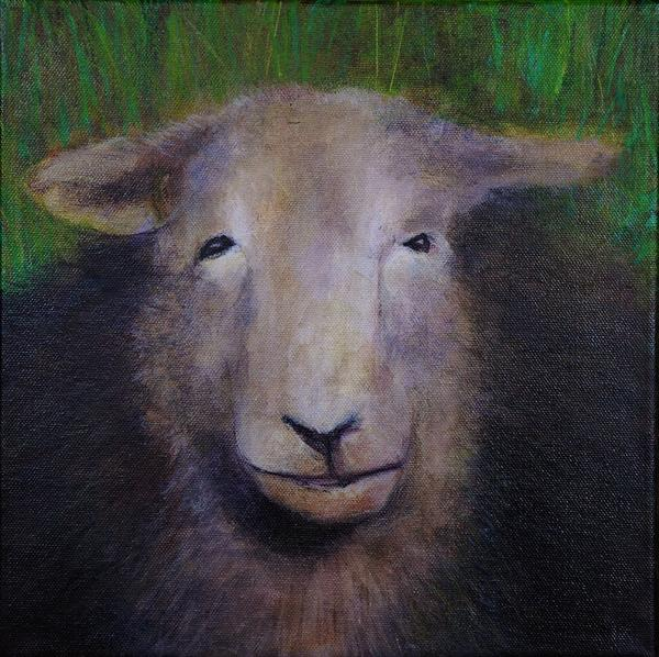 Sheep Looking At Me No. 2 by Caroline Kaye