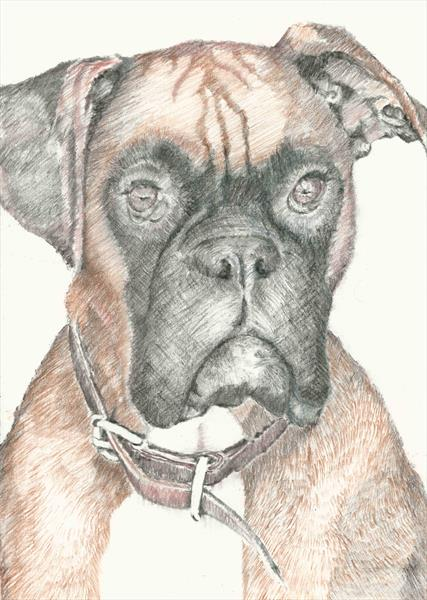 Boxer by Peter Smith