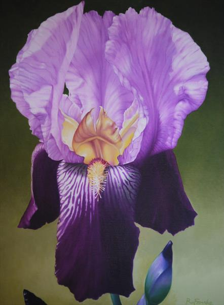 Purple Iris by Richard Franks