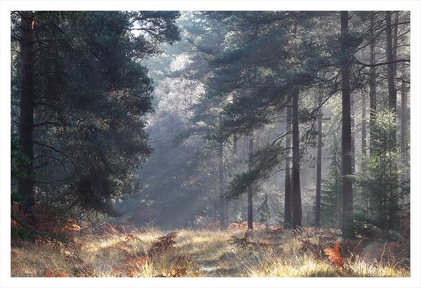 Forest Light by David Baker