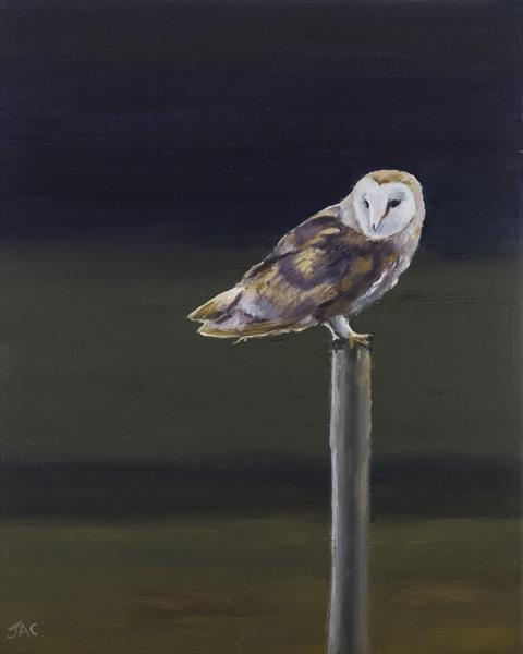 Barn Owl on Post by John Crabb