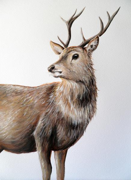 Red Deer by Sarah Featherstone