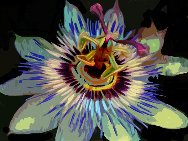 Passion Flower III by Michael Aaron