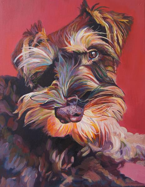 Harry the miniature schnauzer puppy  by Karen Wilcox