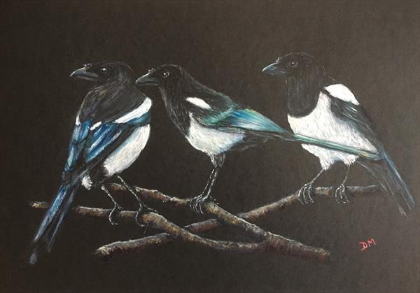 Magpie-'Three for a girl ' by Damion  Maxwell