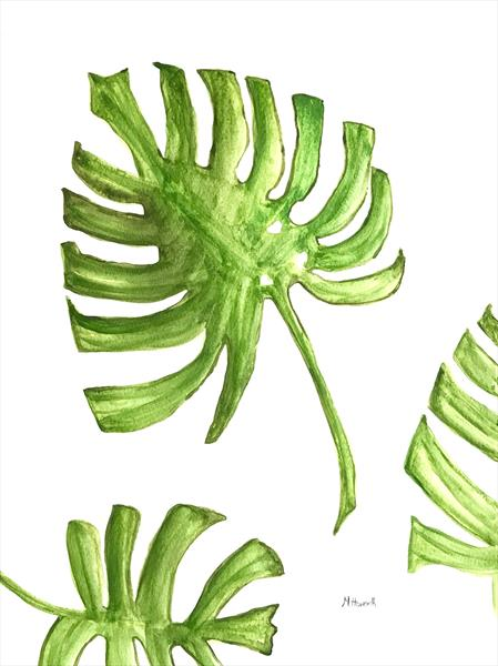 Monstera deliciosa leaves by Monika Howarth