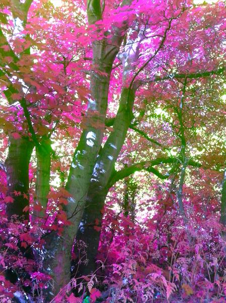 The Colour Of Nature Limited Edition Unframed Photograph (Pink & Orange Editions) by Darren Garrett