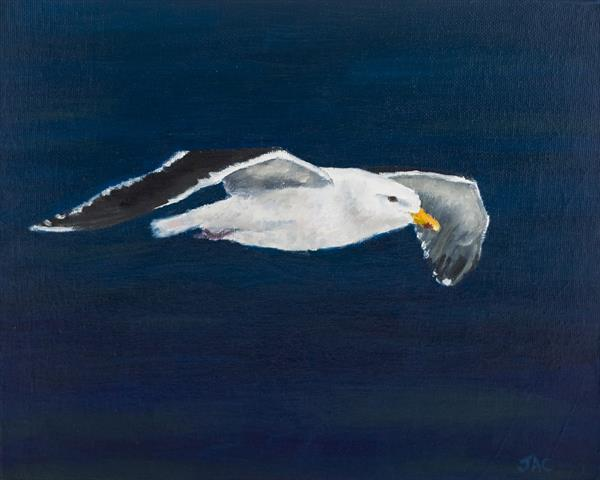 Great Black Backed Gull by John Crabb