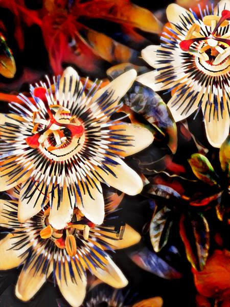 Passion Flower I by Michael Aaron