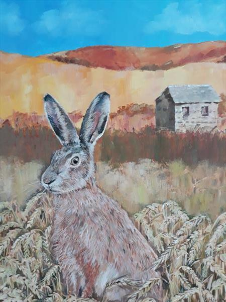 Hare in cornfield  by Susan Harvey