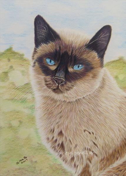 I AM SIAMESE IF YOU PLEASE by shirley  davies