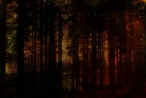 Forest Fire by Linda Hoey