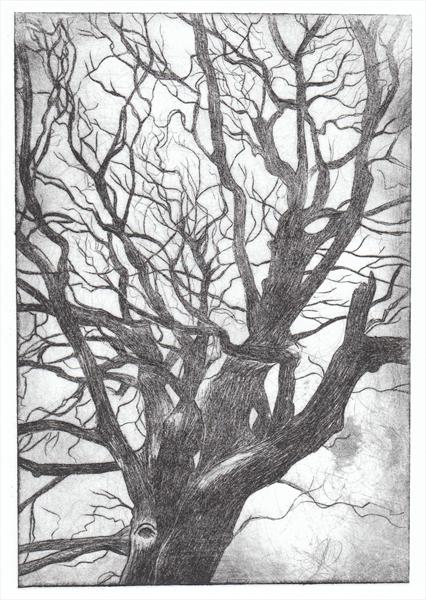 Black Tree Dry Point Print by Hannah Cushing