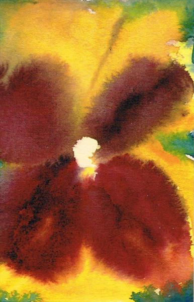 Pansy flower 2 by Maureen Lacey