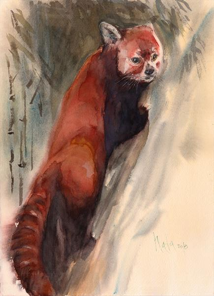 Red Panda In Bamboo by Nata Zaikina
