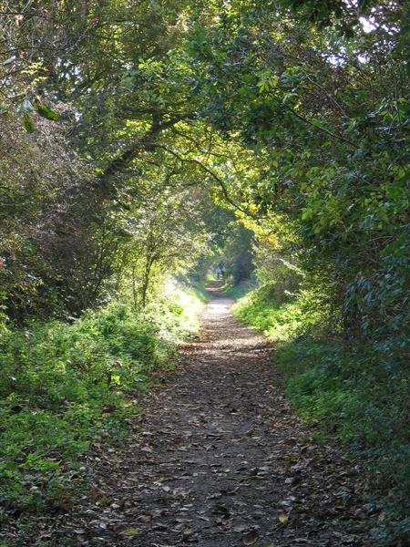 Footpath On the Old Great Eastern Line by Niall Hennessy