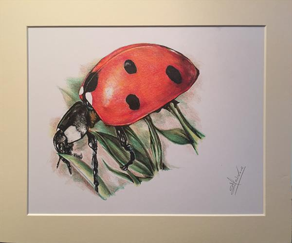 Ladybird by Lucy Malivoire