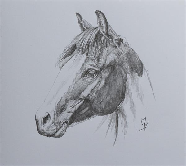 Horse Portrait (3) by Mark Barrable